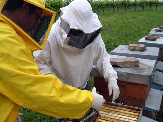 miele - apicoltura